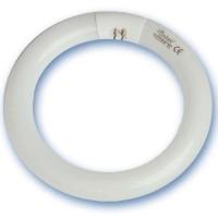 Fluorescentes circulares
